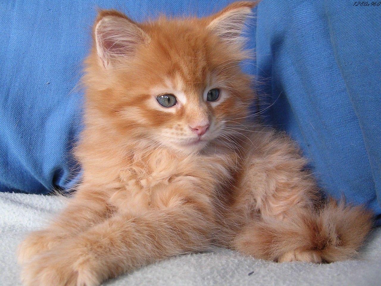 Images de chats - Chats gratuits ...